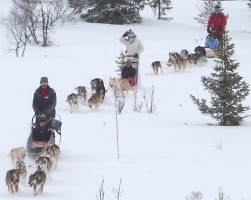 Dog-sledding on a Nordic Challenge holiday